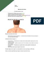 Musculos de la Nuca- CMC.docx