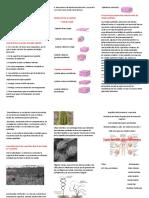 Embriologia Medica Langman 13a Edicion_booksmedicos.org-comprimido-124-133