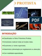 Protozoa Rios