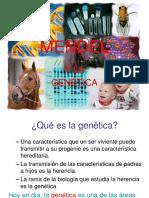 MENDEL y la genética.ppt