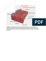 Estructura del PERICARDIO.docx