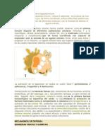Mecanismo de activación de la respuesta inmune.docx