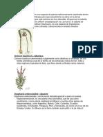 Nombre Científico de Plantas