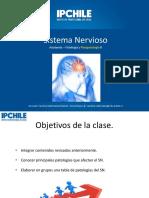 Sistema Nervioso 3
