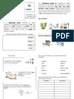 Multiplicacin de Plantas