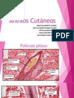 Anexos cutaneos histologia