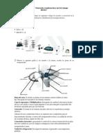 envio_Actividad1_Evidencia2.docx