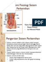 Ppt Anfis Sistem Perkemihan