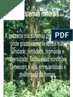 JARDINS COMESTÍVEIS Permacultura 2005