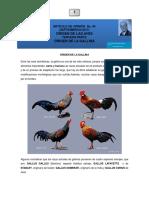 Historia de Las Gallinas