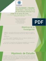 Filogenia Del Género Euclidiodes y Hasodina (Lepidóptera Geometridae) y Descripción de Dos Nuevas Especies Del Bosque Relictual Fray Jorge en El Norte de Chile