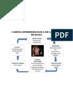 CADENA EPIDEMIOLOGICA DE LA RABIA HUMANA.docx
