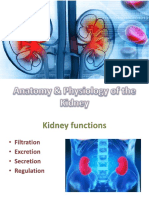 Anatomy & Physiology of the Kidney Ppt