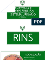 Histologia e Fisiologia do Sistema Urinário