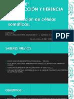 ADN MITOSIS MEIOSIS [Autoguardado].pptx