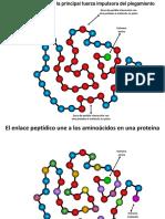 005 Intro Estructura de Proteinas Bq UNal DFMC - May2019