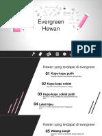 Evergreen Hewan