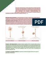 Clase Sinapsis - Documentos de Google