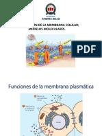 Clase Sesión 12 Organización de La Membrana Celular; Modelos Moleculares 160419 (1)