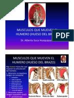 6 Musculos Que Mueven El Humero (Hueso Del
