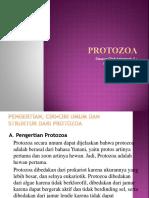 PROTOZOA (Kelompok 3)