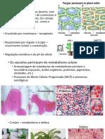3 Meristemas primários, tecidos e epiderme.pdf
