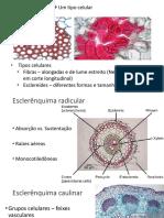 5 Sistema Vascular