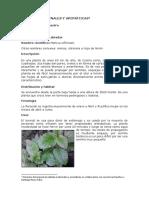 Plantas Medicinales y Aromáticas - Saberes