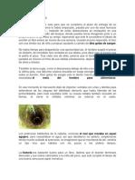 Documento123.docx