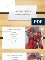 Postlab Muscular System.pdf