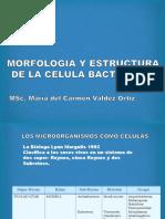 _2.Morfo y Estructura