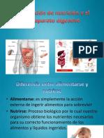 Función de nutrición y el sistema digestivo.pptx