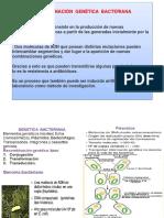 recombinacion genética 8