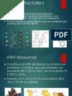 Arn Estructura y Función