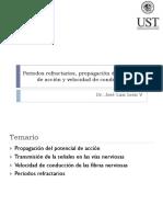 Periodos refractarios y propagación del potencial de acción