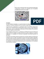 Citoplasma.docx