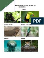 Animales en Peligro de Extincion en Honduras
