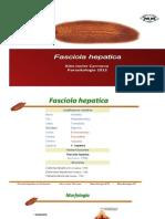 Power Point Fasciola Hepatica