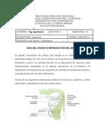 Guía del Aparato Reproductor del Macho