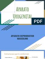 Aparato_Urogenital[1]
