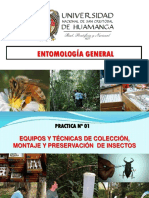 PRÁCTICA 1_Colecta de Insectos