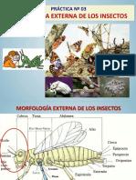 PRACTICA 3_morfología Externa