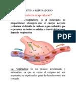 Exposicion Anatomia-sistema Respiratorio