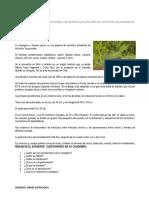 ACTIVIDAD CAS 1RO.docx
