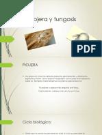 1. Piojera y Tungosis