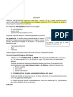 RESUMEN IV CORTE.docx
