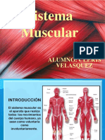 Diapositivas - Sistema Muscular- Cleris 2019