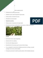 Causas de La Marihuana
