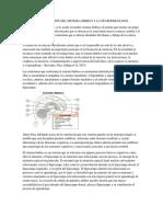 Correlación Del Sistema Límbico y La Neuropsicología