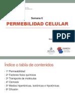 Semana 6- Práctica-Permeabilidad celular.pdf
